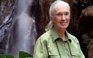 Как Google Планета Земля помогла Джейн Гудолл спасти поколение шимпанзе