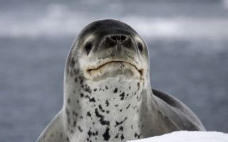 Как USB-накопитель, найденный в Seal Poop, воссоединился со своим владельцем