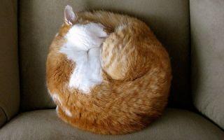 Mozilla Talkilla или мессенджер в вашем браузере
